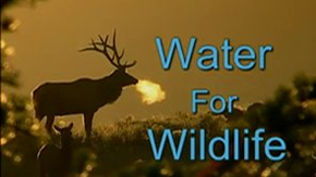 Michael Pellegatti Wild Visions's Videos on Vimeo - Water for Wildlife