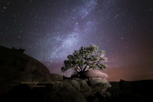night sky milky way and tree snowflake arizona