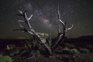 night sky milky way dead tree snowflake az