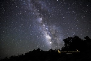 The Milky Way over a tree line - Snowflake, AZ